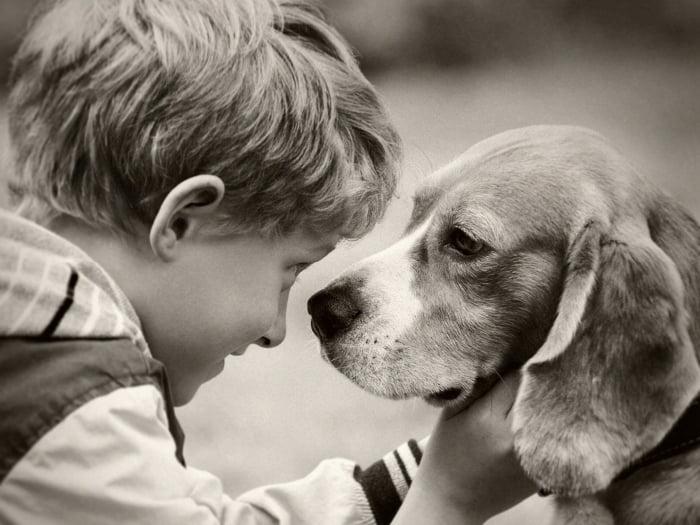 terapia con perro