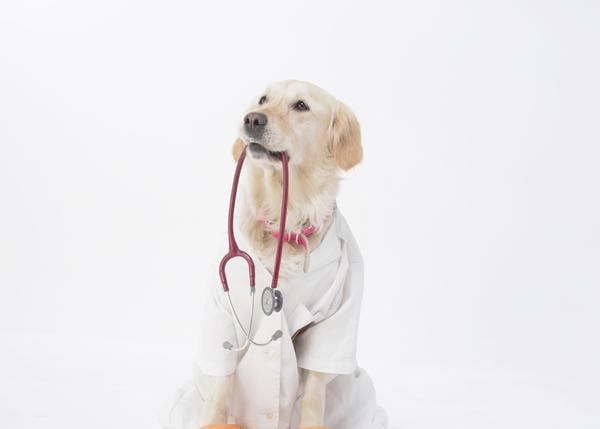 transmisión enfermedad perros