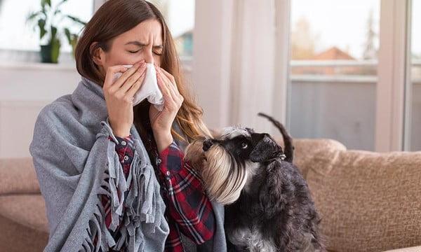 alergia-a-los-perros