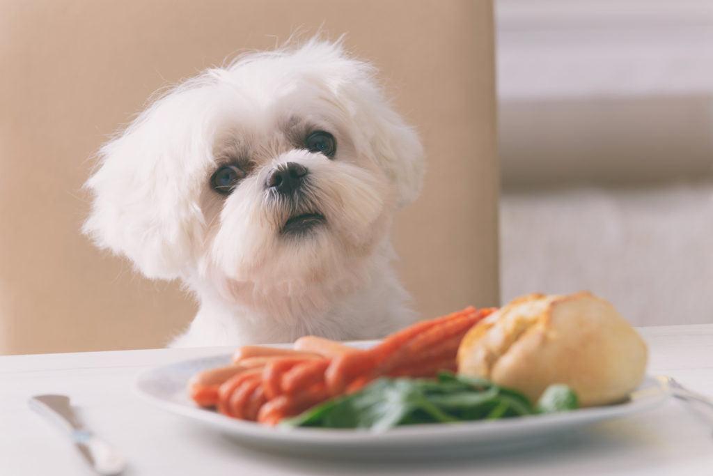 alimentacion-saludable-perros