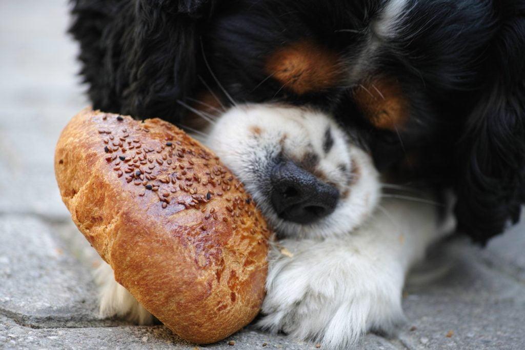 comida-perros-alergia