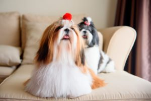 como-hacer-feliz-un-perro
