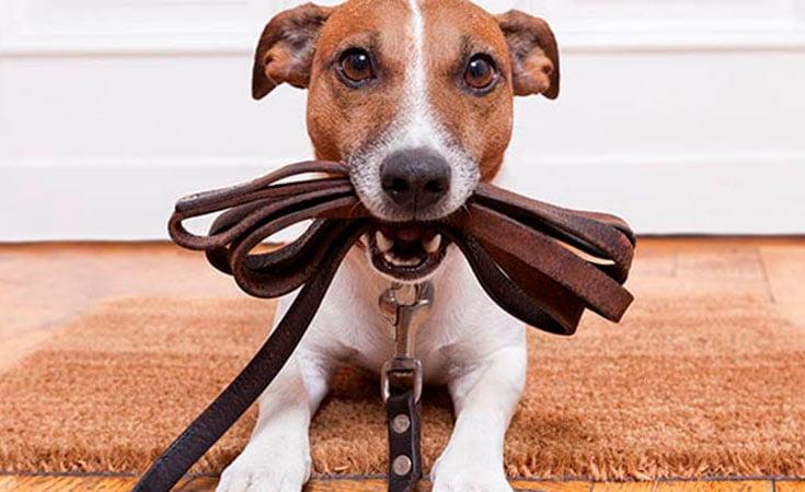 consejos_paseo_perro