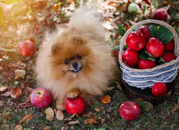 fruta_para_perros