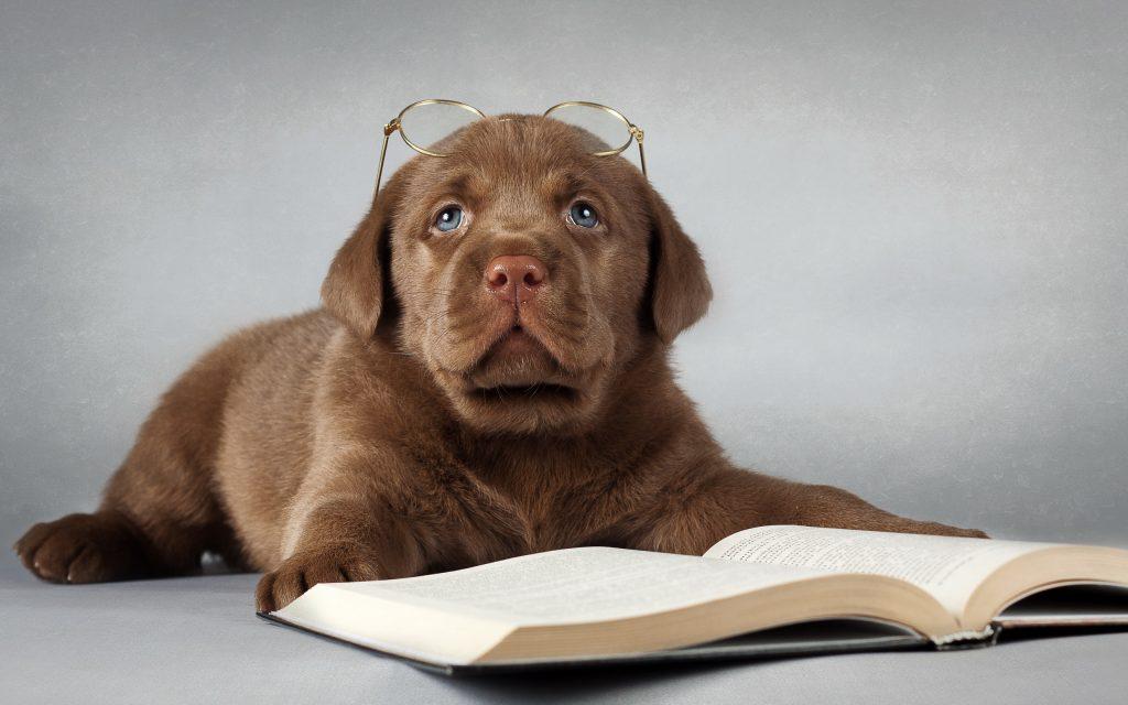 gotas-ojos-perros