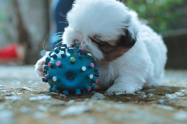 juguetes-para-perros
