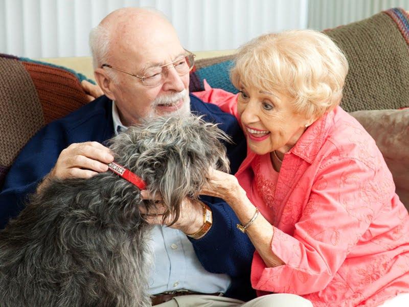 mascotas-y-ancianos