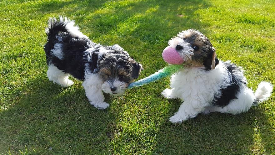 perros-sanos-y-felices