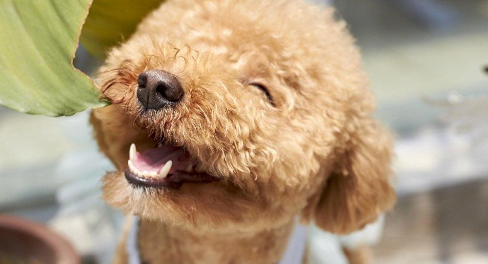 raza-perro-personas-mayores