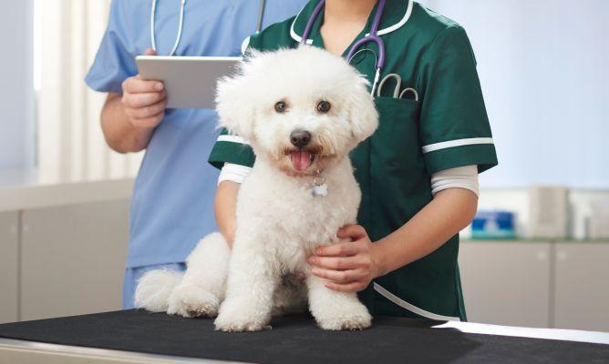 seguro-medico-perros
