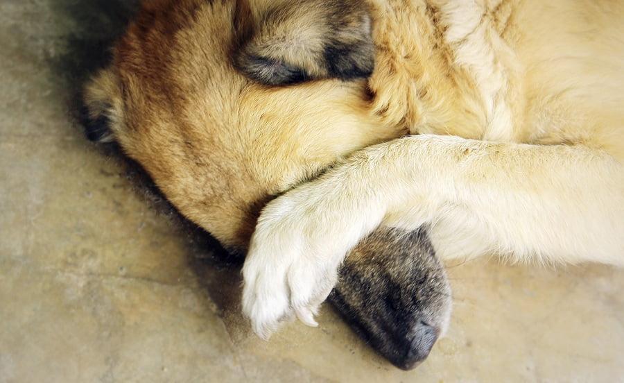 seguro-perros-obligatorios