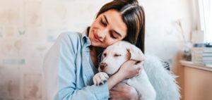 seguros_para_perros