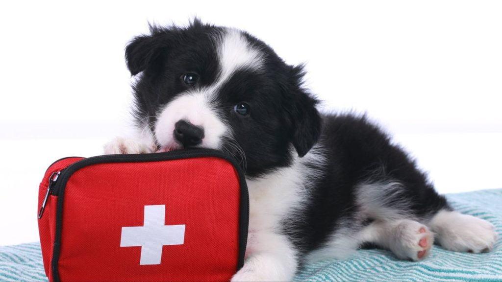botiquín para perros