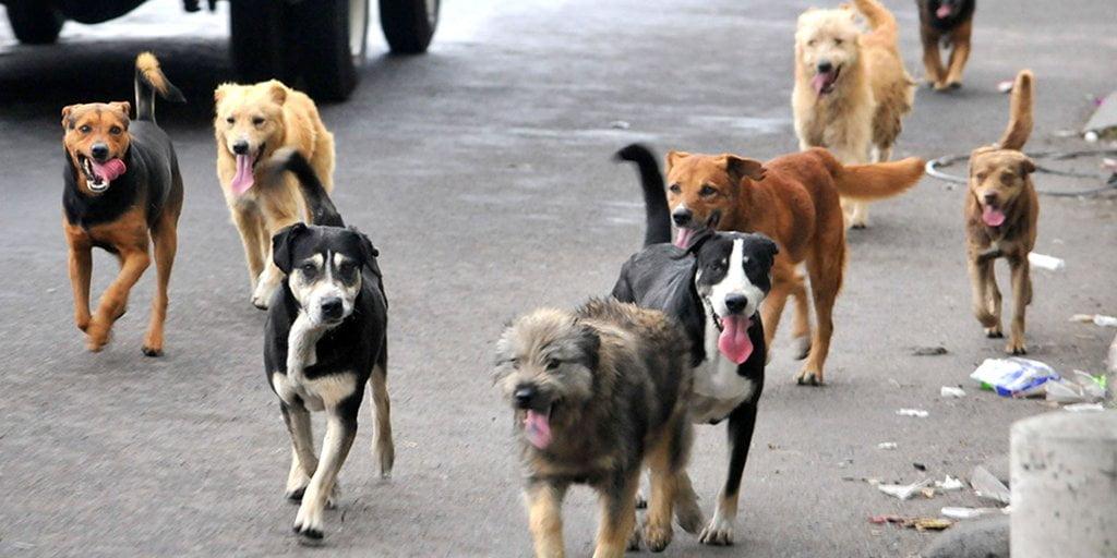 evitar contagio rabia perros