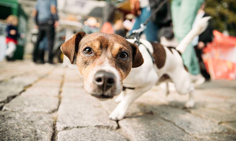 medicamentos para perros