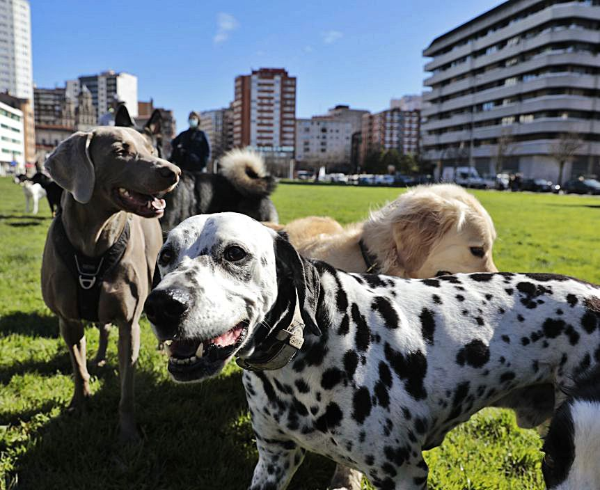 normativa pasear perros