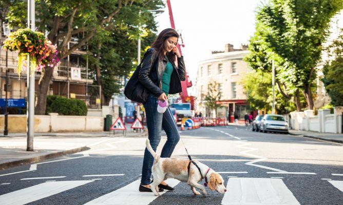 pasear mascotas ciudad