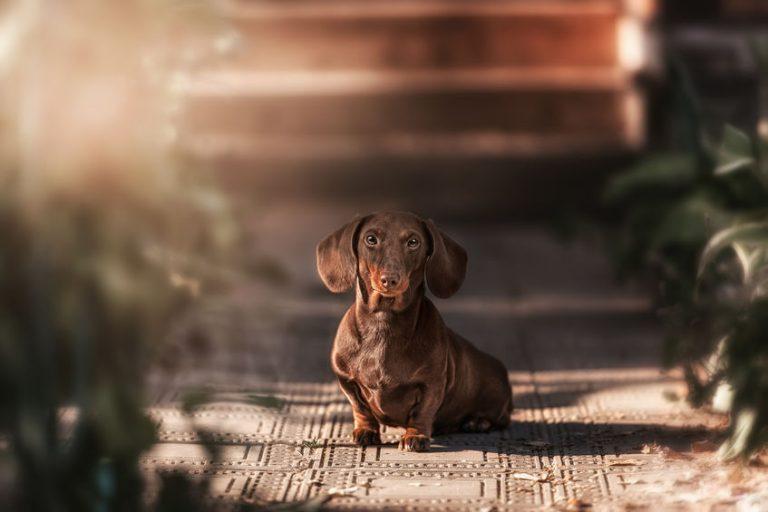 pasear perro educación canina