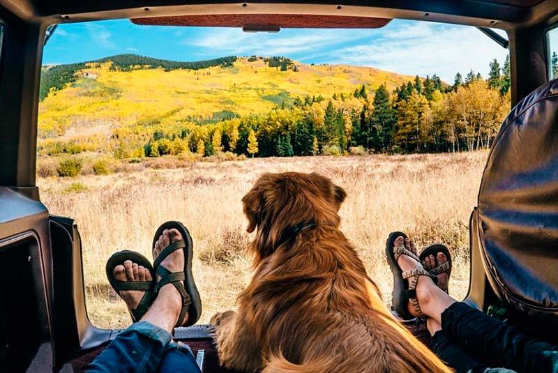apps de viajes para perros