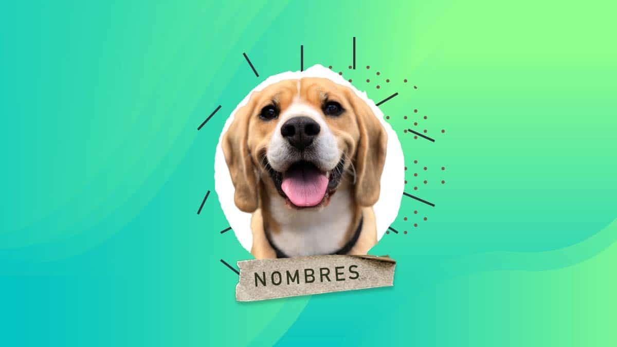 lista nombre perros