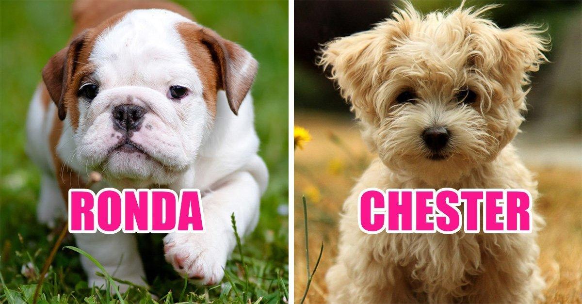 los mejores nombres de perro