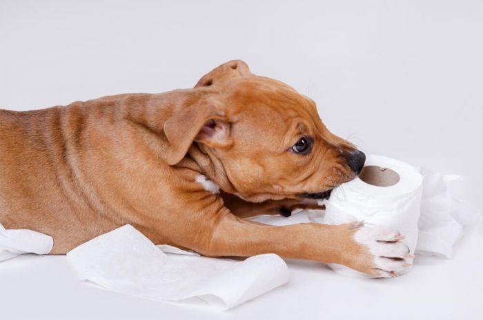 por qué los perros se comen las cacas