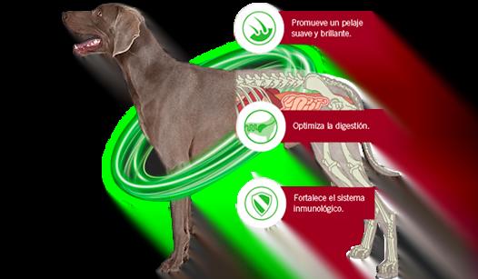 recomendaciones espirulina perros